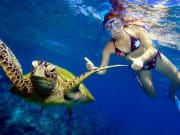 great barrier reef woman snorkeling turtle