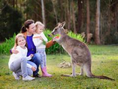 kangaroo_shutterstock_96727474