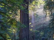 USA_San Francisco_Gray Line_Muir Woods & Sausalito