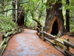 USA_San Francisco_Gray Line_Muir Woods & Sausalito