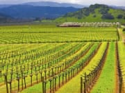 San Francisco_Gray Line_Sonoma Napa Valley Wine