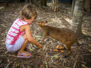 Wallaby kiss kid interacting with animal