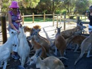 Caversham Wildlife Park's friendly kangaroos