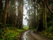 Eucalypt Forest Australia
