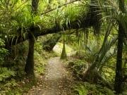 Waitakere Ranges Wilderness Experience Eco Tour