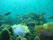 marine life under the sea pulau payar marine park