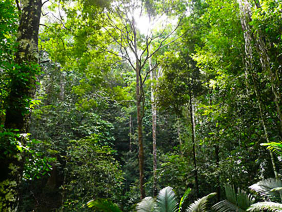 Penang_National_Park (2)