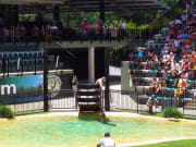 Croc_Express_and_Australia_Zoo (3)
