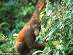 Sandakan_Turtle_Island_and_Orangutan_Sanctuary (1)