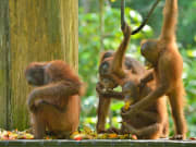 Sandakan_Turtle_Island_and_Orangutan_Sanctuary (6)