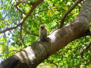 Monkey_Beach_Excursion (3)