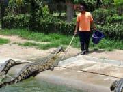 underwater_World_and_Crocodile_Farm (4)
