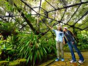 botanical garden kinabalu park