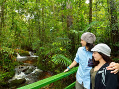 kinabalu national park trekking botanical garden