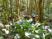 Mt. Kinabalu Botanical Garden _540095266