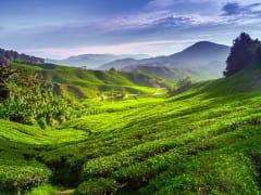 cameron highlands (5)