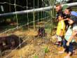 Mangrove_Forest_and_Orangutan (6)