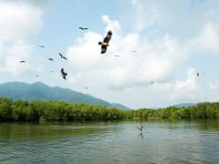 langkawi mangrove forest eagle watching