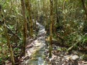 Bako National Park_471861728