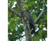 Klias_Wetlands_River_Safari (3)
