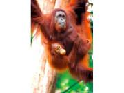 Semonggok_Wildlife_Rehabilitation_Centre (3)