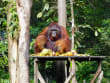 Semonggok_Wildlife_Rehabilitation_Centre (3)