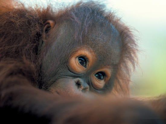 Matang_Wildlife_Centre_and_Kubah_National_Park (2)