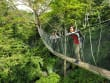 rainforest (5)
