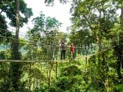 rainforest (10)