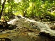 kuala lumpur rainforest