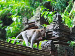 Monkey Forest, Kedaton and Tanah Lot Tour