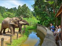lok kawi wildlife park borneo pygmy elephant