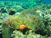 marine life in kota kinabalu sabah malaysia