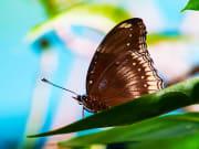 butterfly park KL (11)