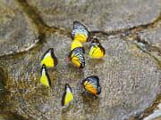butterfly park KL (9)