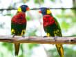 Bird Park KL (9)
