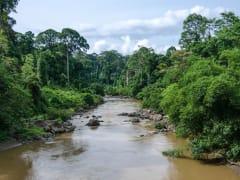 Danum River_509942884