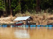 Kuala Tahan virgin rainforest (2)
