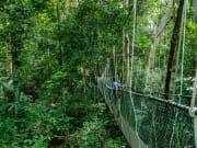 Canopy Walk_430100008