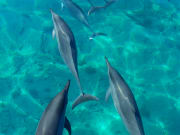 Dolphins & You 04