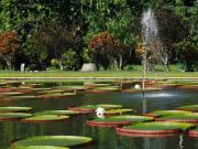 Bogor Botanical Gardens Jakarta