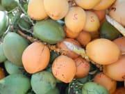 黄色いキングココナッツも