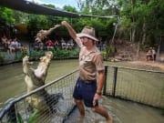staff feeding crocodile hartley's zoo