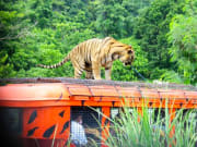 zoobic safari tiger at the roof of caged jeepney
