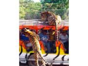 Zoobic Safari (4)