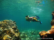 man snorkeling in anilao batangas philippines