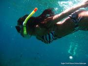 anilao diving (5)