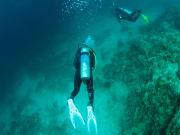 anilao diving (4)