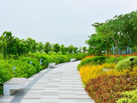 Ayala Business Park beautifully landscaped plants