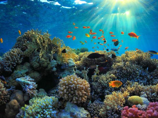 Snorkeling_-_reef